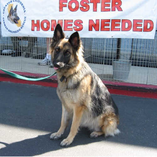 Foster Homes Needed!